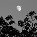 moon-b&w-3036.jpg
