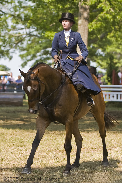 sidesaddle lady riding sidesaddle at upperville horse