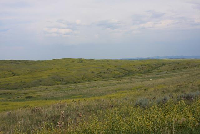 Montana June 208 159
