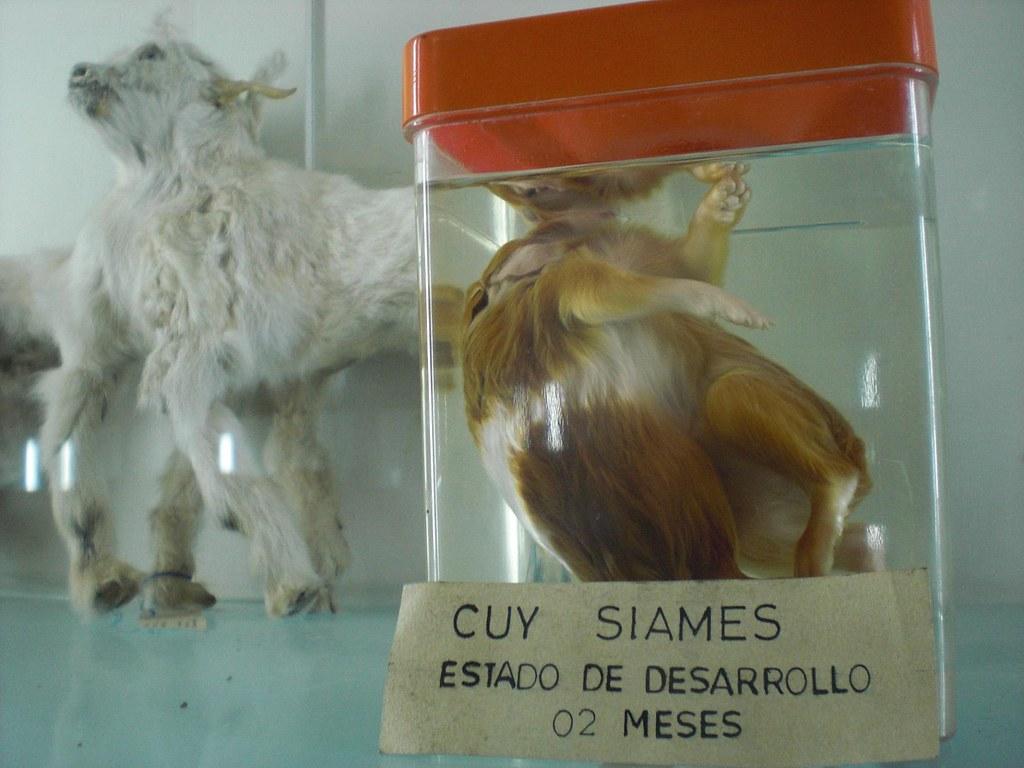 May Natural History Museum Pembrose