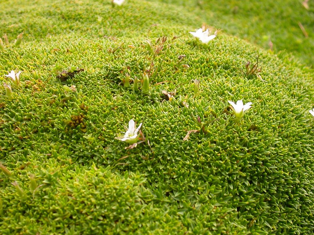 Mousse jardin des plantes paris 1 titem flickr - Jardin des plantes rouen adresse ...