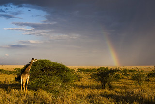 Serengeti rainbow | by conorwithonen