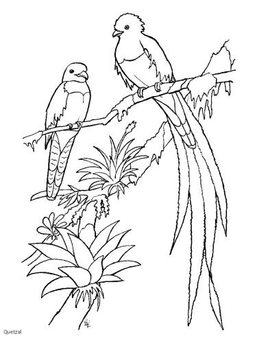 quetzal2 dibujos cuzo Flickr