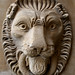 A lion at Wollaton