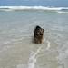 Iggy at Noorhoek beach, Cape Town 2003