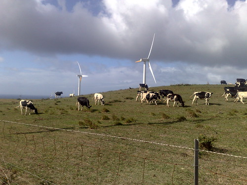 Cows and wind turbines | by digitalsadhu
