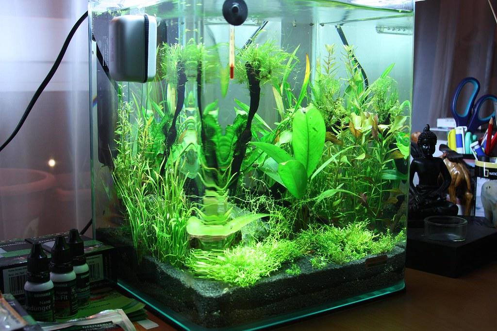 dennerle nano 20l aquarium my new dennerle nano 20l aquari flickr. Black Bedroom Furniture Sets. Home Design Ideas