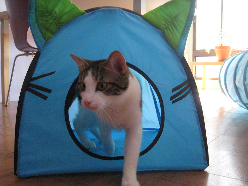 Ikea cat house  Isabel Wang  Flickr