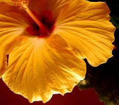 wild yellow bloom