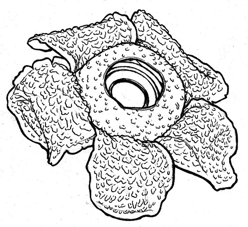 Galerry flower coloring diagram