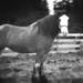Pinhole Horse