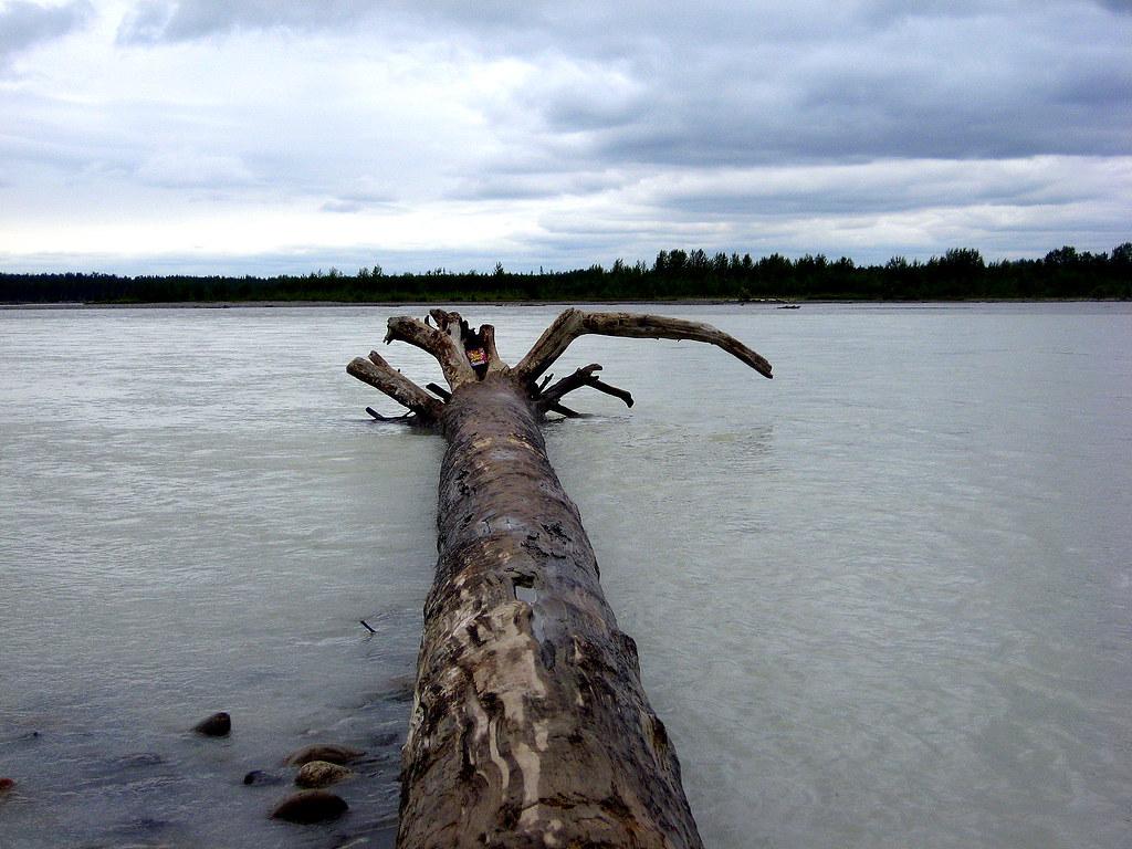 trees summer alaska - photo #18