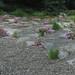 Gravel Garden Pan