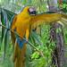Camera Loving Parrot