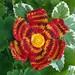july08-flower