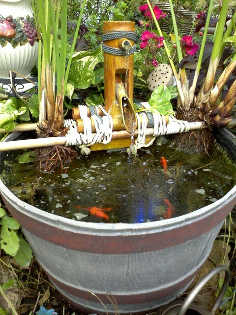 My mini koi pond half barrel with goldfish fountain for Goldfish pond filter
