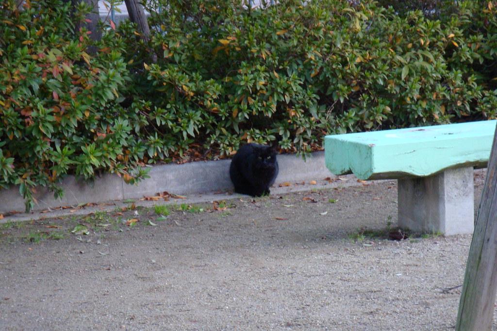 Cea Cat B Statut B