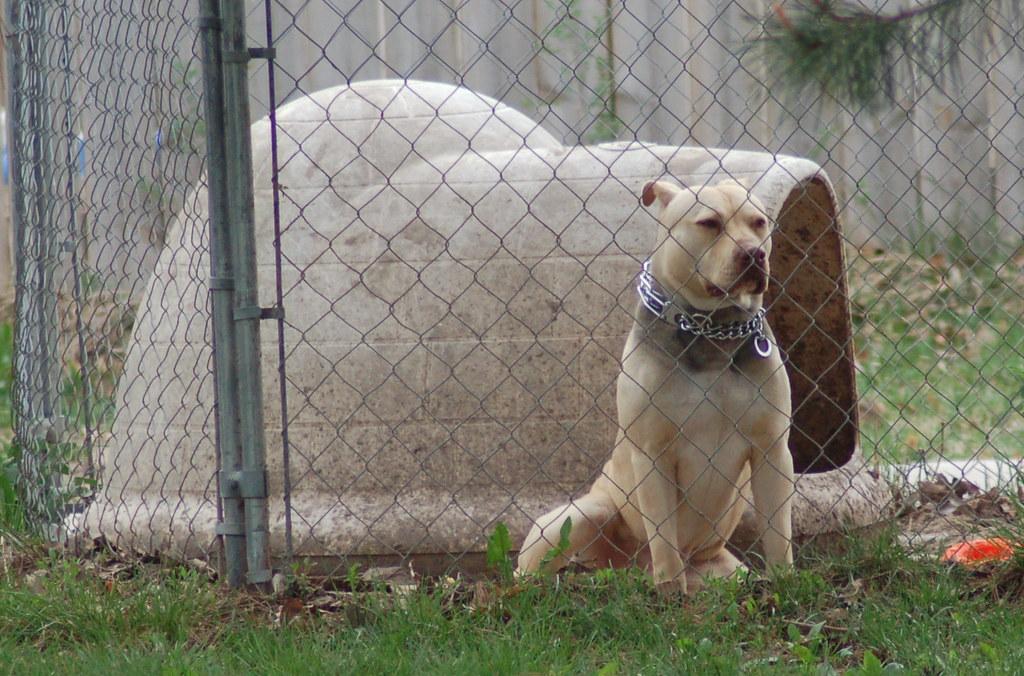 I M The Biggest Baddest Dog Around Here Wht Wolf9653