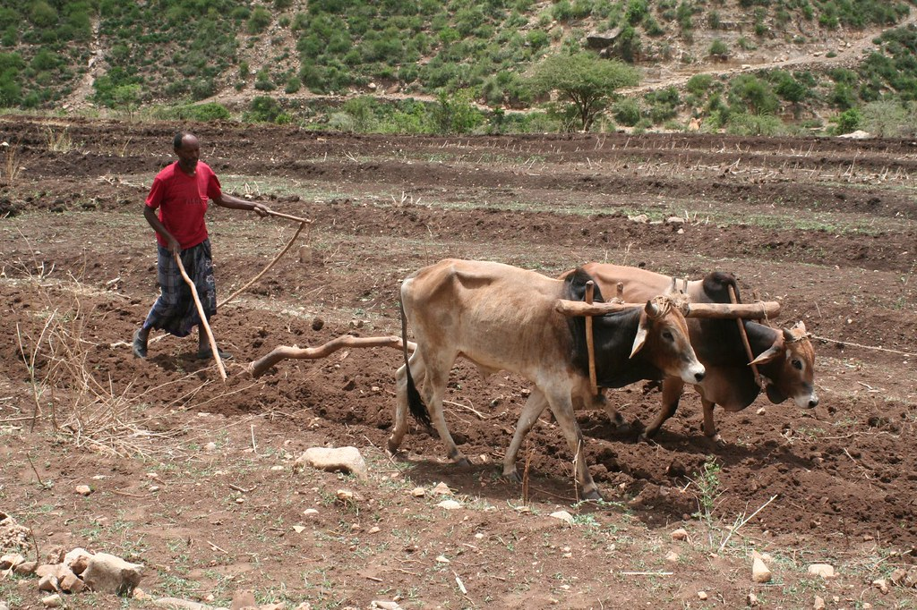 Ethiopia Traditional Ploughing Soil Preparation Flickr