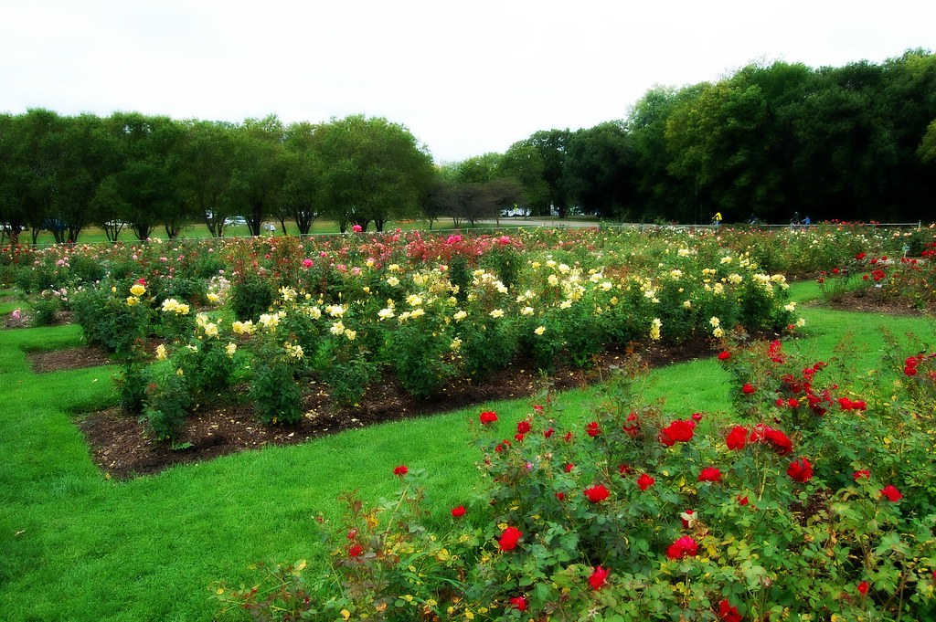 lyndale park rose garden the rose garden is situated acros flickr
