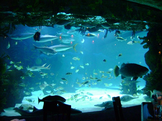 Houston Aquarium Restaurant 3 Alex Gray Flickr