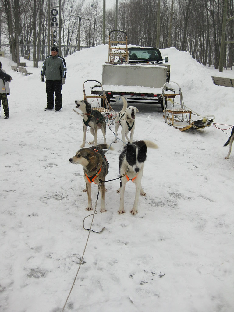 Sleds To Get Dogs Down Steps