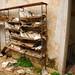 Abandoned Mansion - Beirut