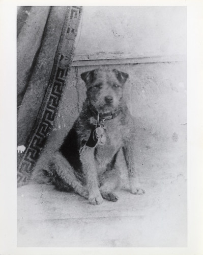 Owney | by Smithsonian Institution