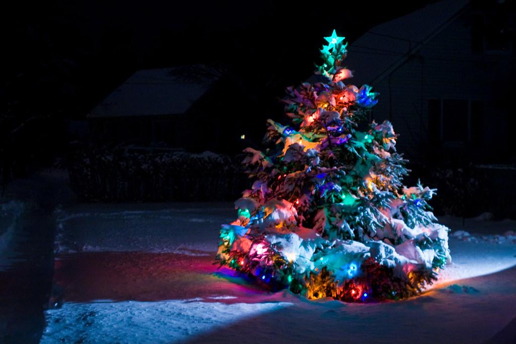 snow covered Christmas tree | Dan Bowe | Flickr