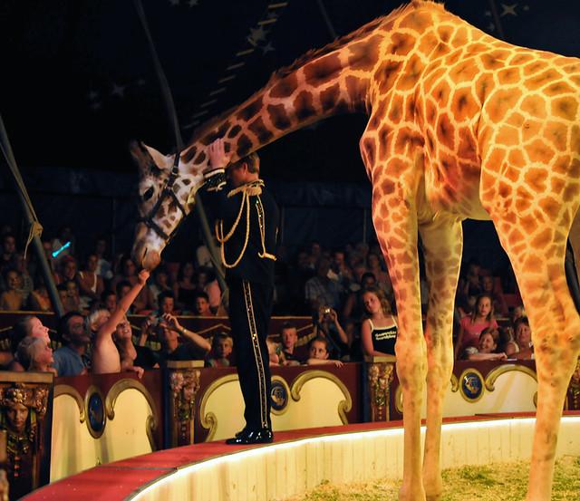 Circus Belly Wien Holland 2008 The Belly Wien Giraffe