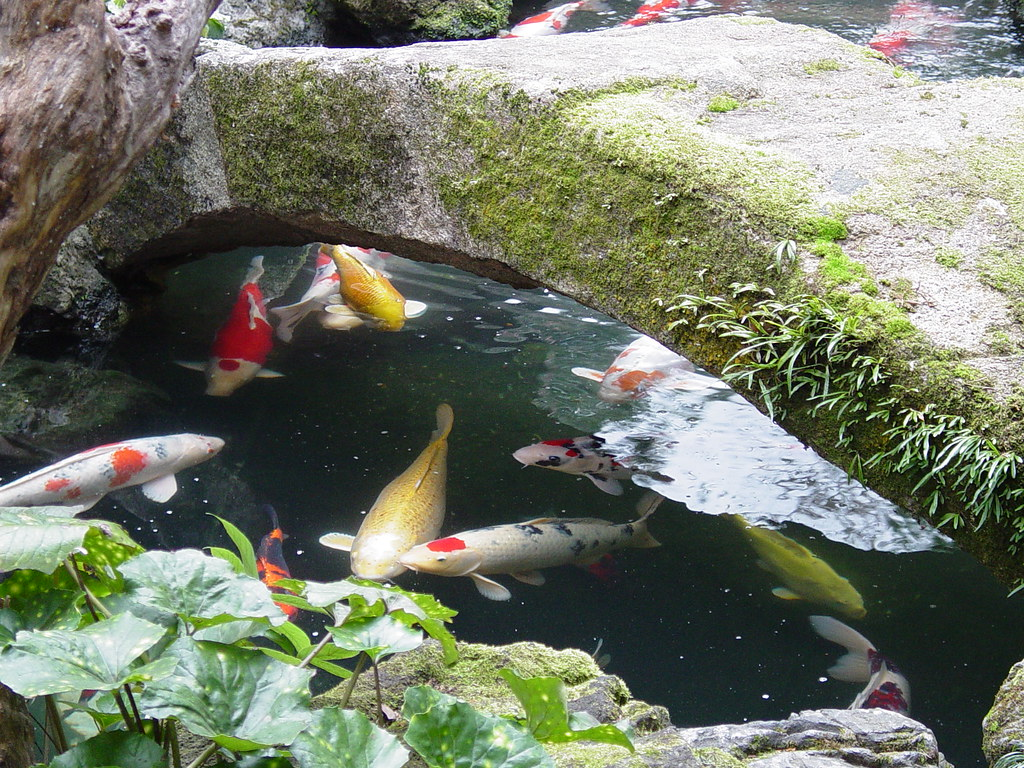 Koi pond kyoto japan saimo mx70 flickr for Stone koi pond