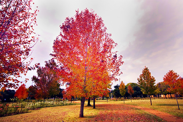 Autumn 2008, Pretoria, South Africa | D40, Sigma 10-20mm ...
