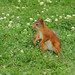 Observant squirrel