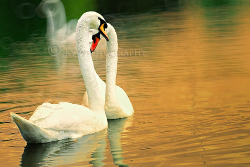 The in Love Pair | by KY Design and Photography