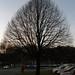 Lime tree winter 071204