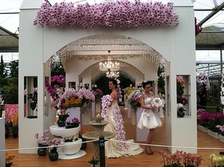 Orchid Wedding | by RHR Horticulture