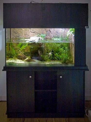 Turtle Tank / Schildkrötenaquarium | Turtle Tank of our ...