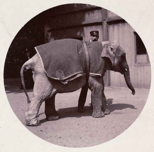 Baby elephant at the zoo | by National Media Museum