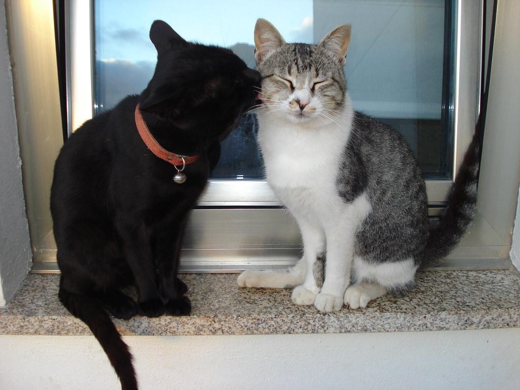 Kitten behavior kneading
