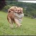 Flying Dog!