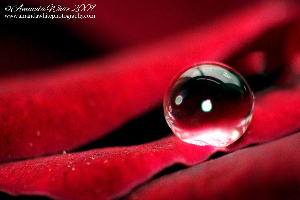 Raindrops on Roses   I...
