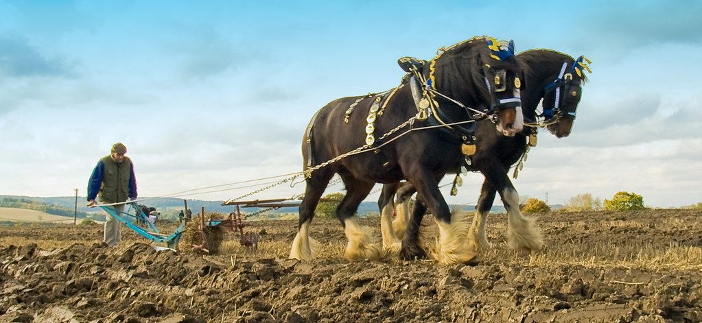 Image Result For A Horse For