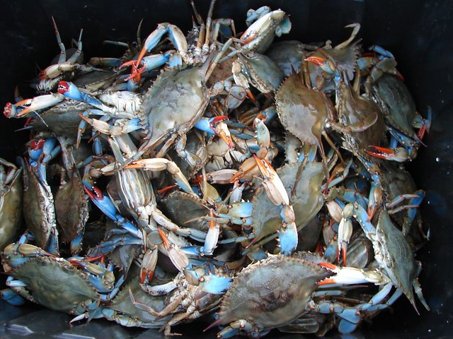 Blue Claw Crabs For Sale Long Island