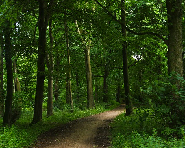 Come For A Walk In The Green Green Forest