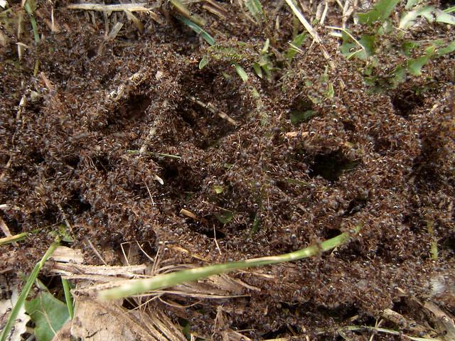 Tiny Brown Ants Around Kitchen Sink