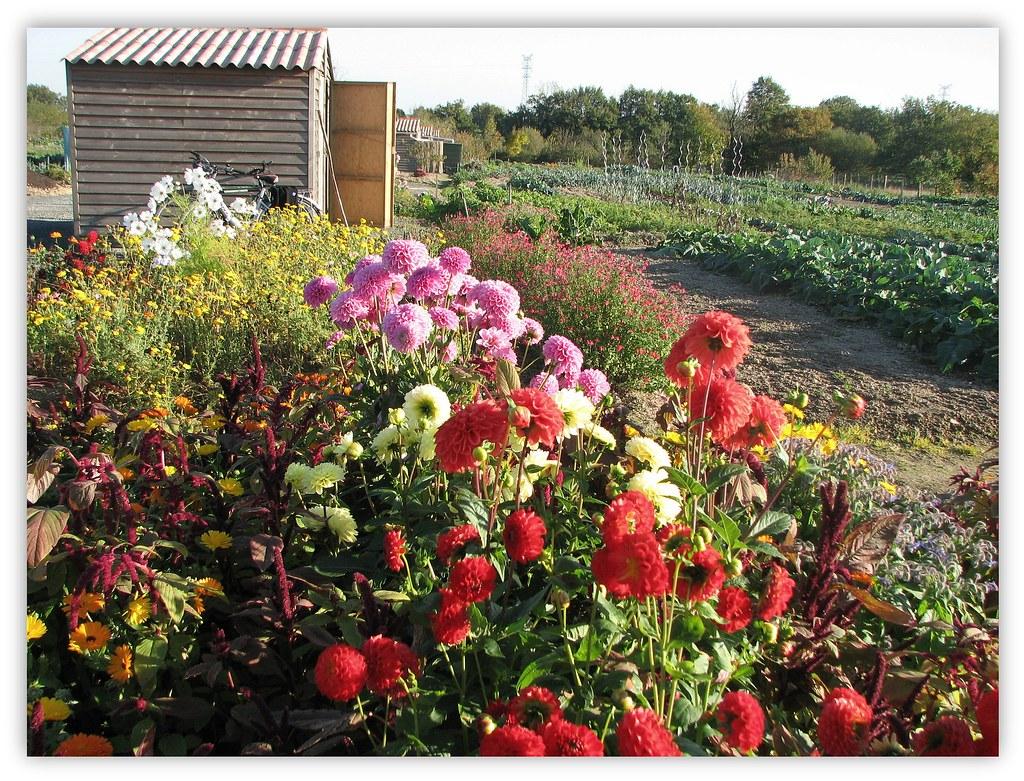 Jardin ouvrier jardins ouvriers de bressuire situ s rue for Jardin ouvrier