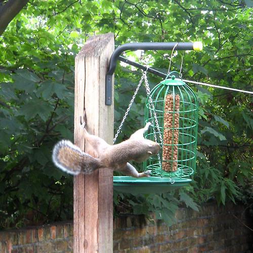 Squirrel Proof Birdfeeder Birdfeeder In My Garden Being