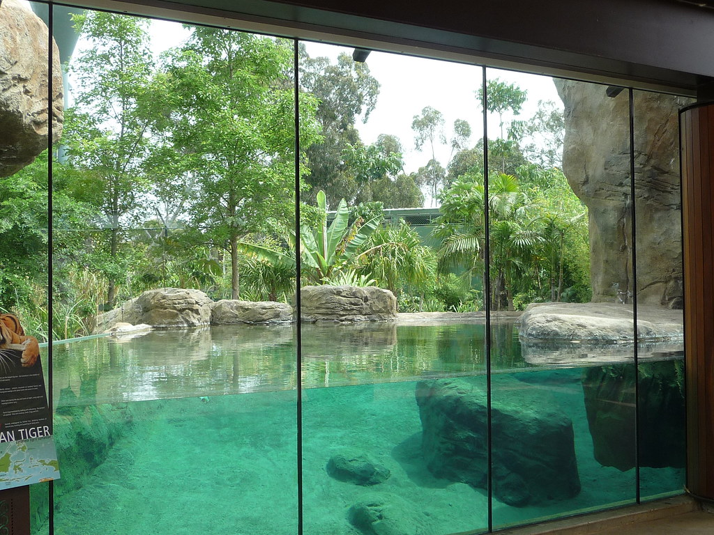 Sumatran Tiger enclosure (Tuan's pool) | Adelaide Zoo ...