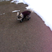 Bluey the Chihuahua running in her winter boots