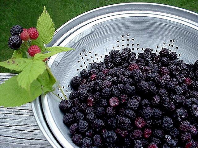 raspberry pi 8 go
